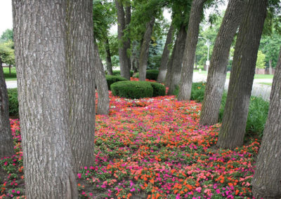LanohaNurseries_Omaha_Nebraska_LandscapeMaintenance_Gallery_005
